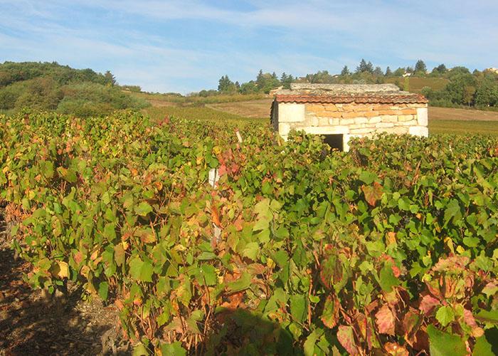 domaine viticole dans le beaujolais